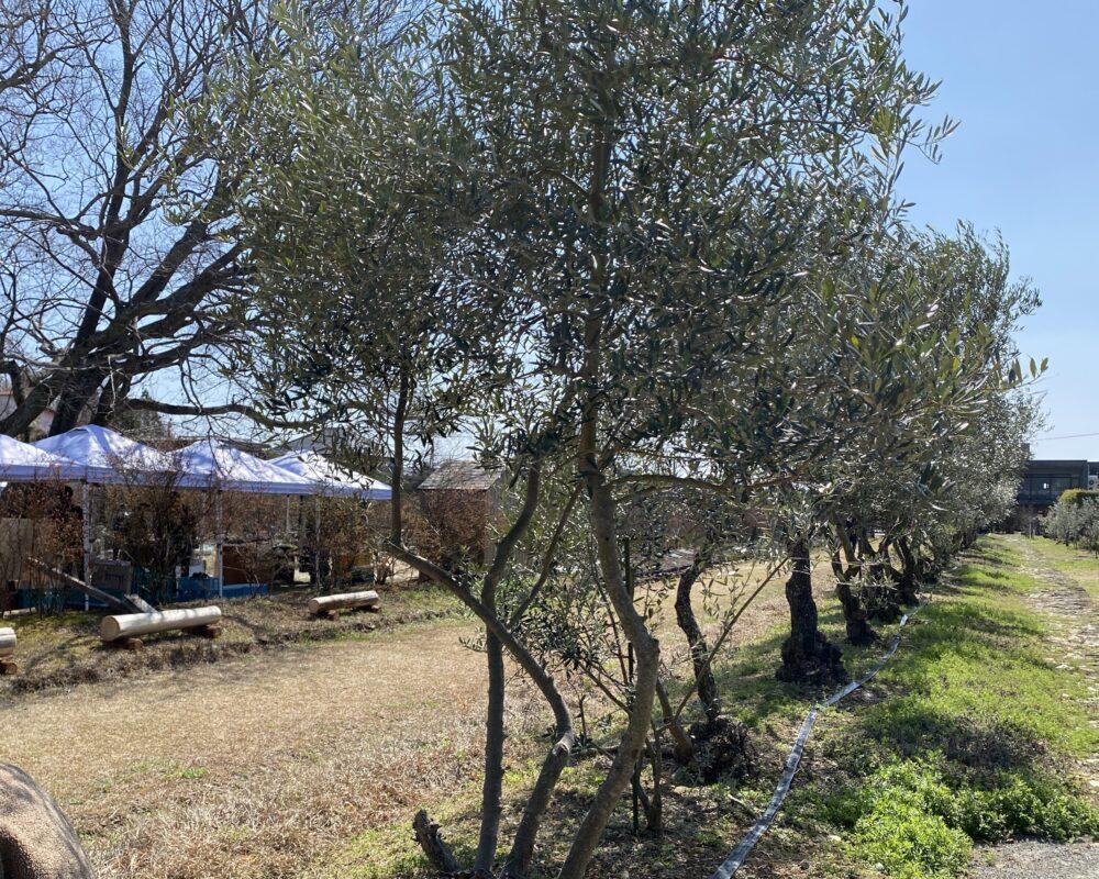 蓮理の木の下で 農園